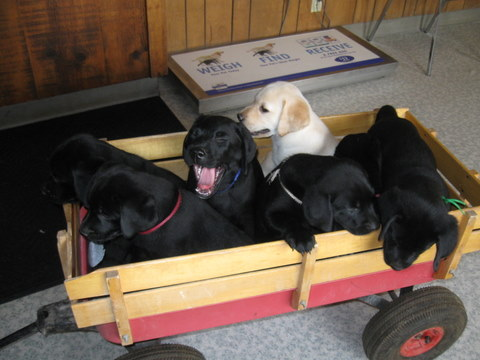 The puppy wagon
